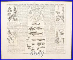 Chatelain Plants, Animals of Panama. 6-116 1718 Atlas Historique Engraving