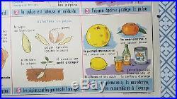 French vintage school botanical poster Orange citrus lemon fruit botany 1960
