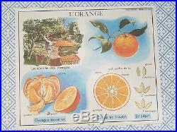 French vintage school botanical poster Orange fruit botany 1960