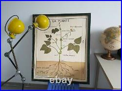 French vintage school botanical poster flower plant botany 1960